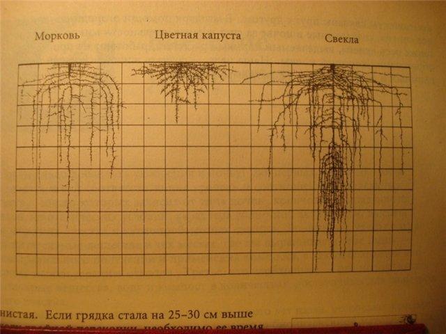 """Думаешь достаточно.  Вот схемы из книги Д. Джевонса  """"Как выращивать больше овощей """" ."""