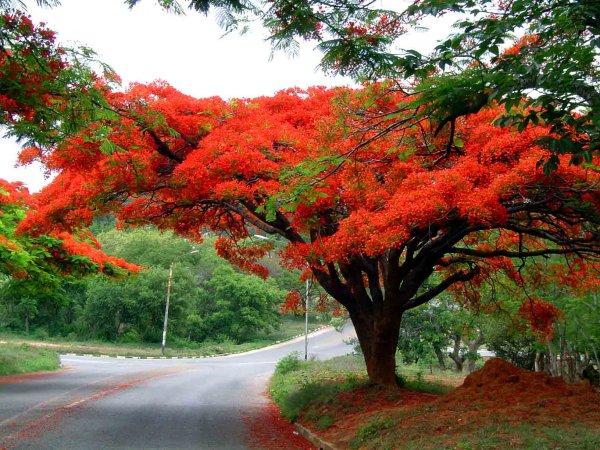 цветущие деревья фото